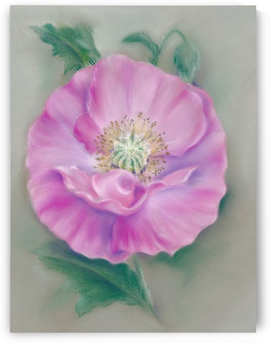 Pretty Pink Poppy by MM Anderson