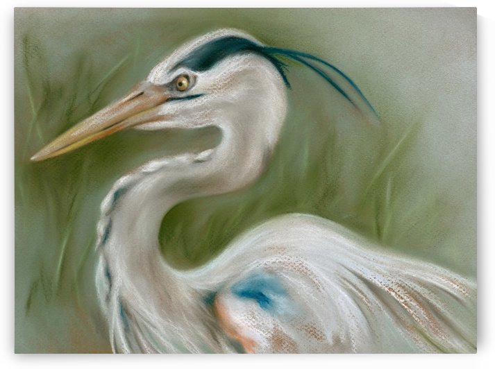 Great Blue Heron by MM Anderson