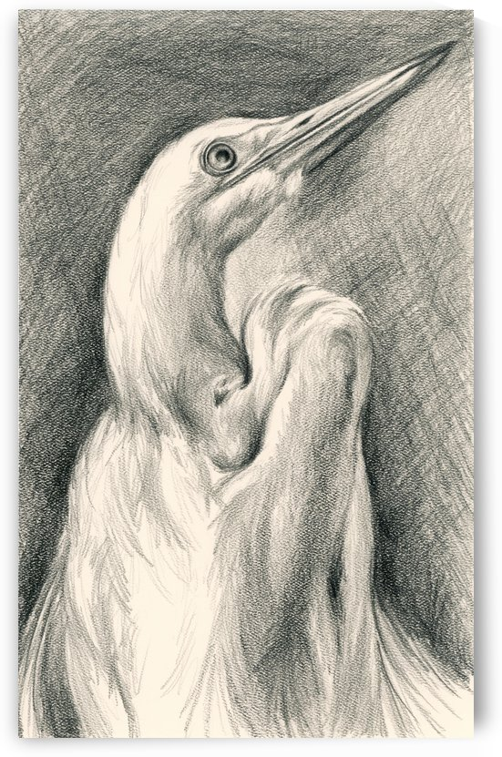 Egret Looking Heavenward by MM Anderson