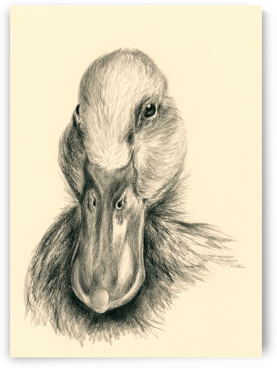 Duck Portrait in Charcoal by MM Anderson