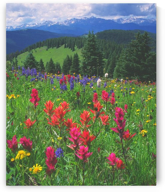 Wildflowers on Shrine Ridge by Steve Tohari