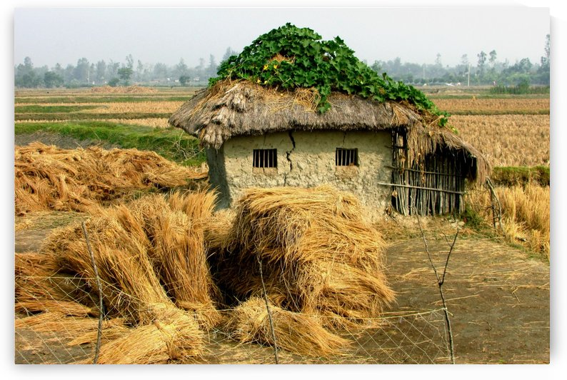 MY  VILLAGE  HOUSE by MUKTINAVA CHOWDHURY