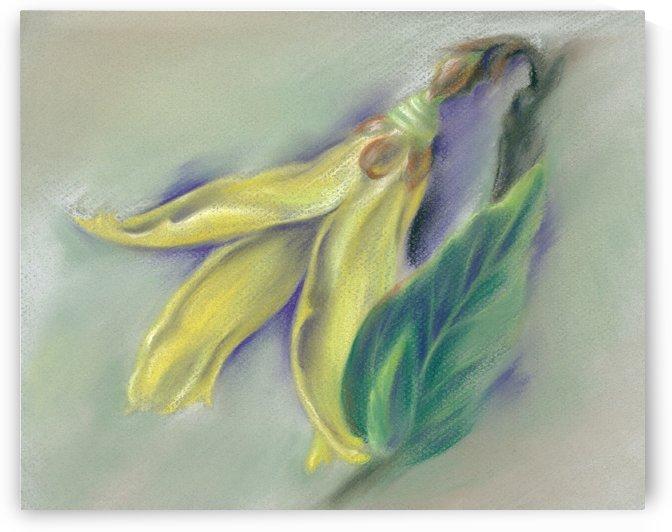 Forsythia Springtime by MM Anderson