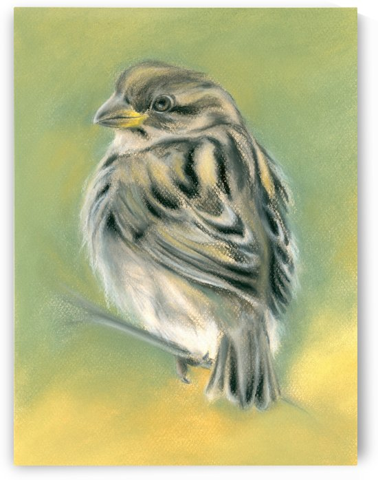 Sunny Sparrow by MM Anderson