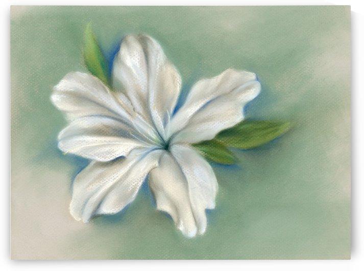 White Azalea Flower by MM Anderson