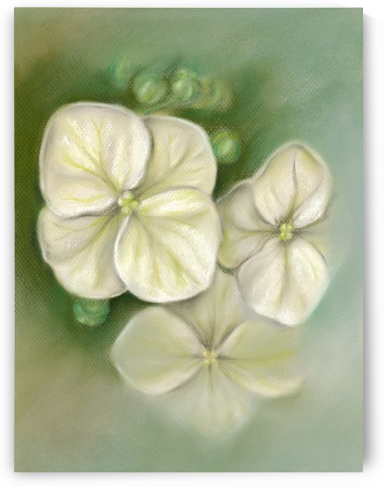 Soft Summer Hydrangea Blossoms by MM Anderson