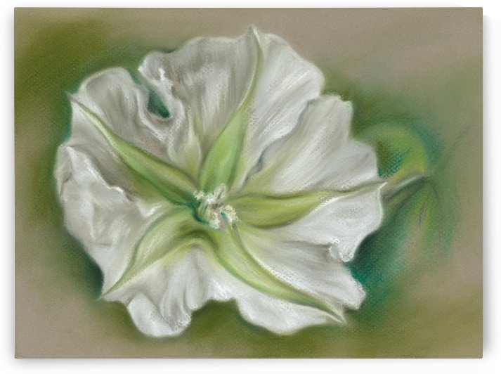 White Evening Moonflower by MM Anderson