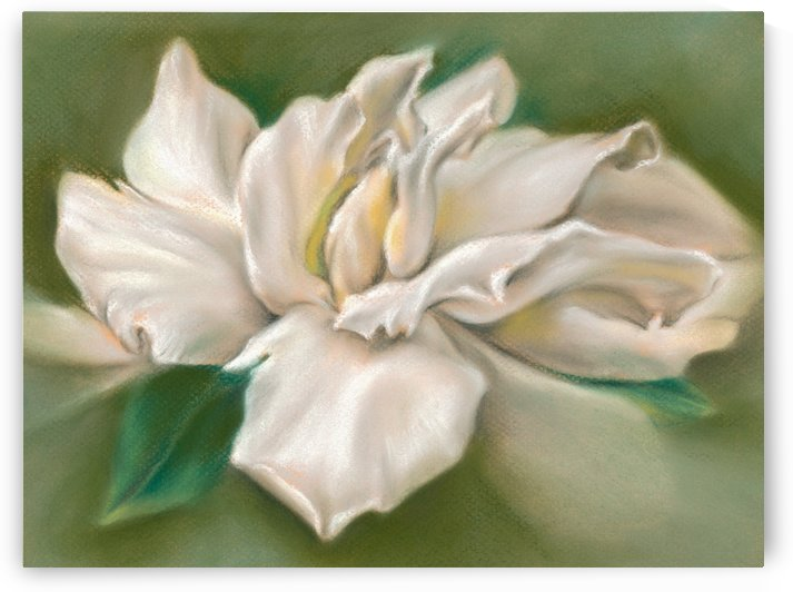 Gentle Gardenia by MM Anderson