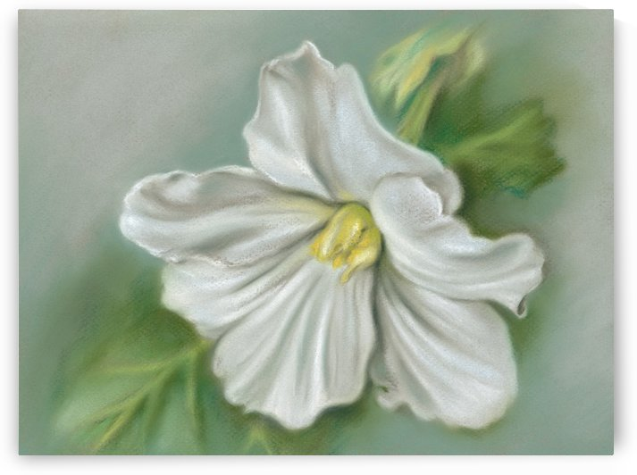 White Begonia Flower by MM Anderson