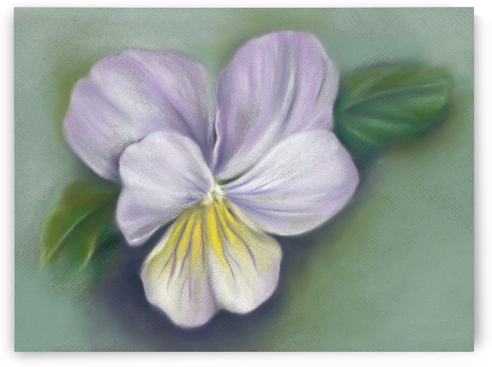 Viola Purple and Yellow by MM Anderson