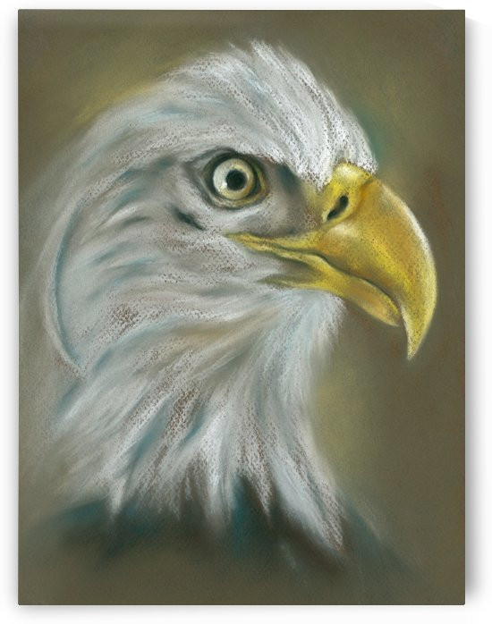 Bald Eagle with a Keen Eye by MM Anderson