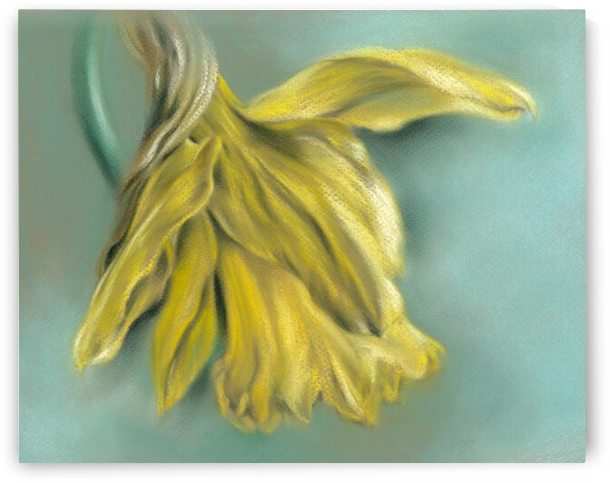Newly Blossoming Daffodil by MM Anderson