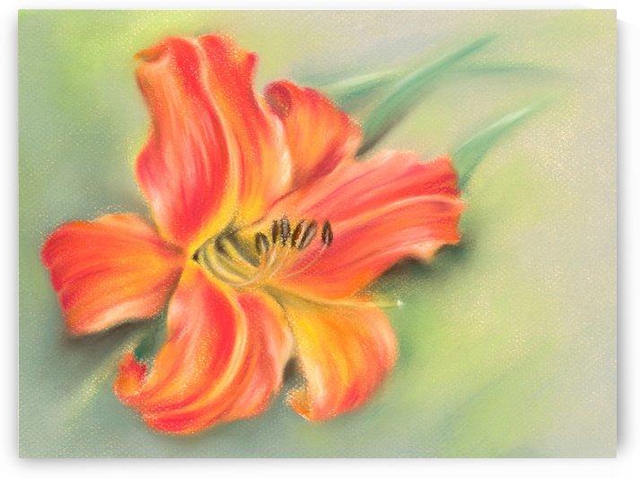 Vivid Orange Daylily by MM Anderson