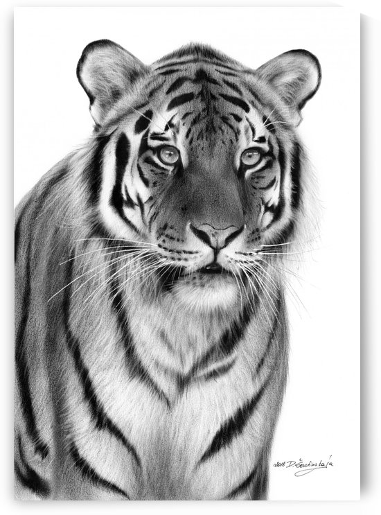 Tiger  by Danguole Serstinskaja