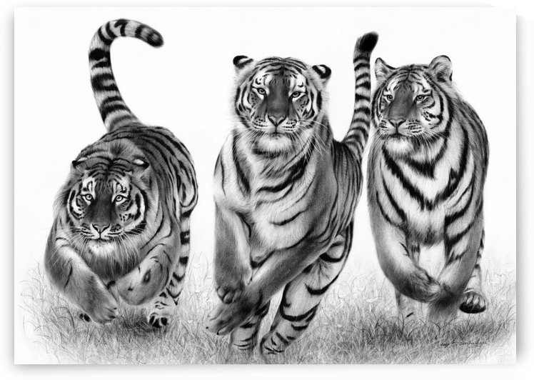 Running Tigers by Danguole Serstinskaja