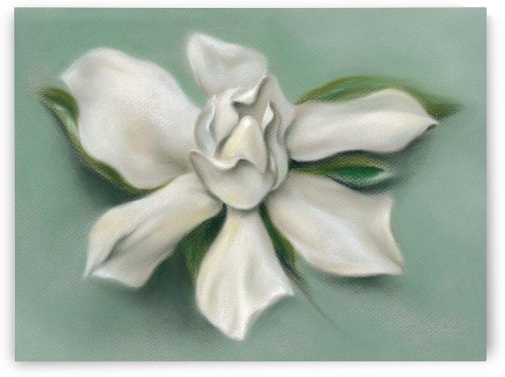 Gardenia Flower by MM Anderson