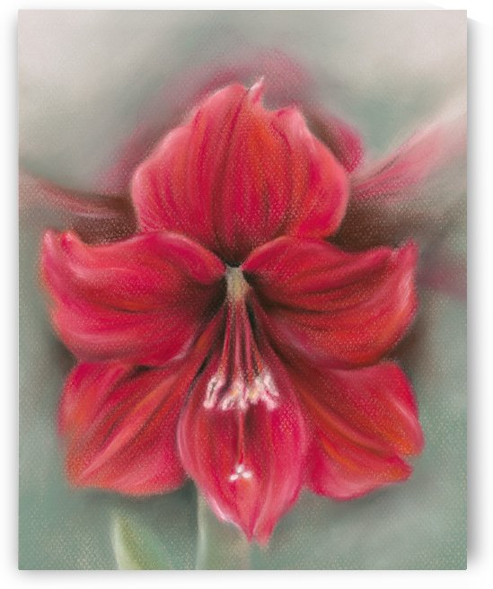 Red Amaryllis Flower by MM Anderson