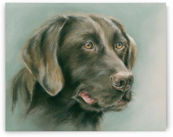 Chocolate Labrador Retriever Dog by MM Anderson