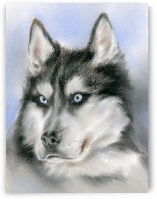 Siberian Husky Dog Portrait by MM Anderson
