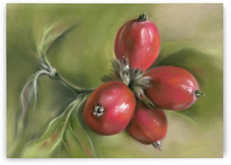 Autumn Dogwood Twig with Berries by MM Anderson