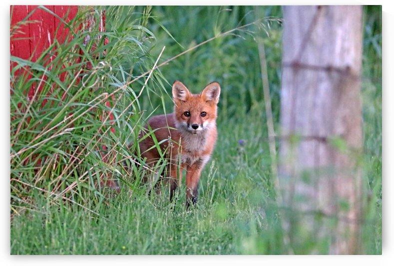 Adorable Fox Kit by Deb Oppermann