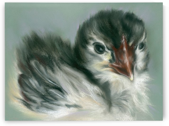 Soft Black and Yellow Chick by MM Anderson