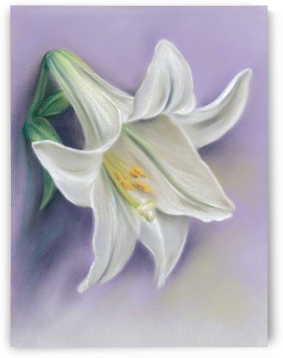 White Easter Lily Blossom on Purple by MM Anderson