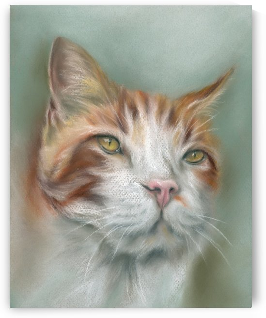 Ginger and White Tabby with a Pink Nose by MM Anderson
