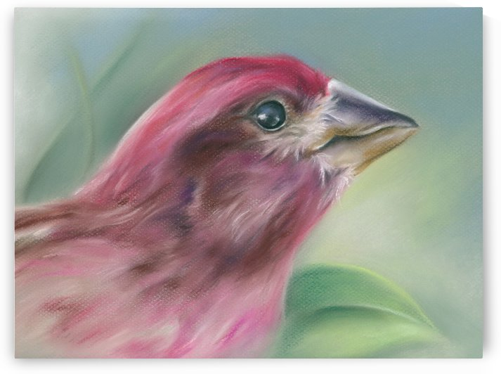 Purple Finch in Profile with Green Leaf by MM Anderson