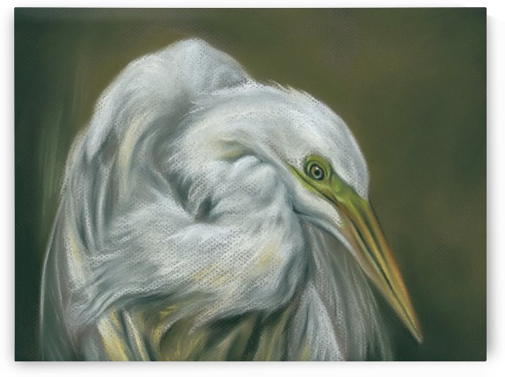 Great Egret White Waterfowl Portrait by MM Anderson
