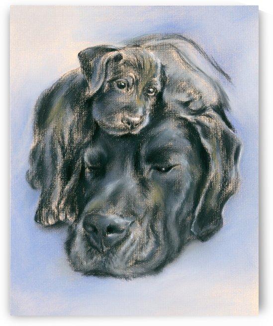 Black Labrador Retriever Puppy and Parent by MM Anderson
