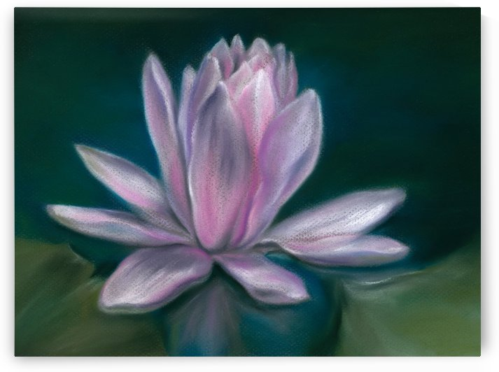 Pink Water Lily Flower on a Pond by MM Anderson