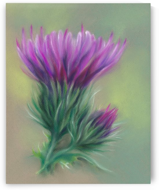 Purple Thistle Blossom and Bud by MM Anderson