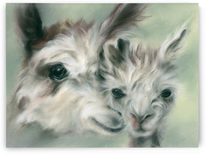 Alpaca Youngster and Mother by MM Anderson