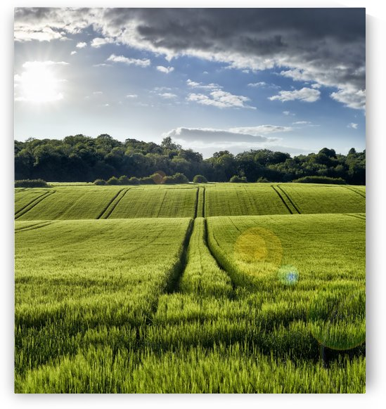 Wheat Fields by Adrian Brockwell