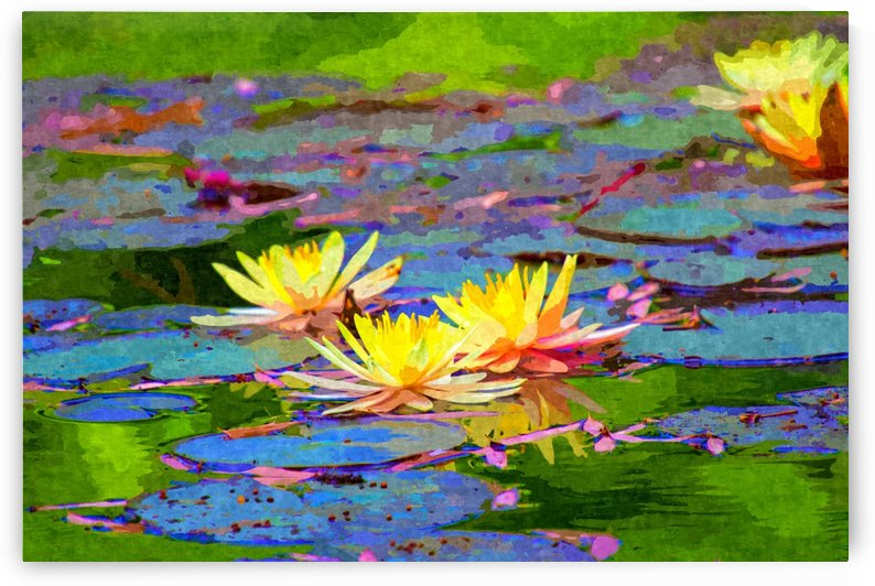 Yellow Water Lillies by Alpenglow Workshop