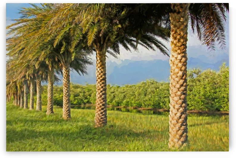Date Palm Row by HH Photography of Florida