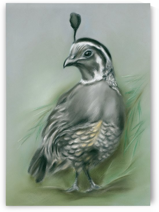 Quail and Pine by MM Anderson