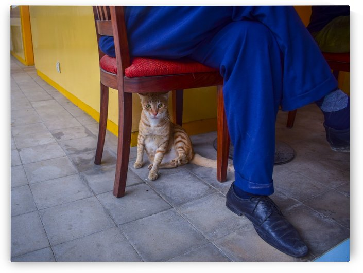 Under the Chair by Photopoet