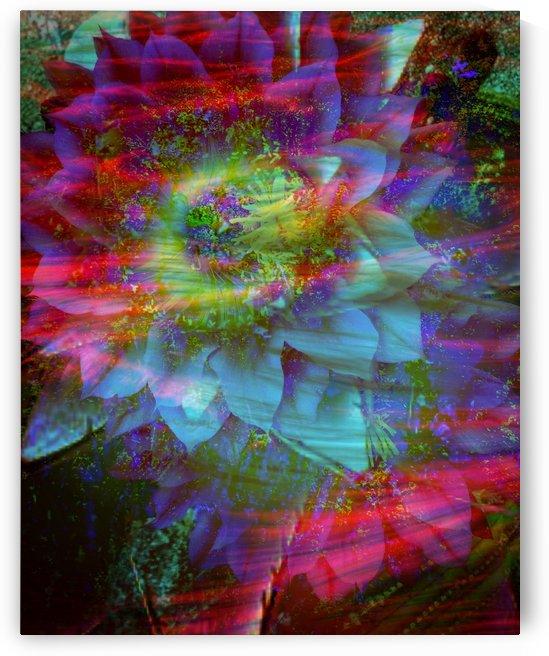 Showy Bloom by Grammydudley