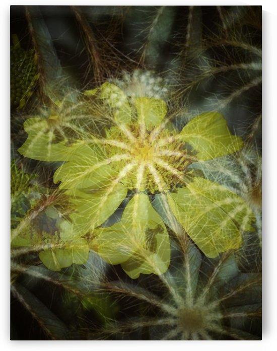 Dazzling Spiders by Grammydudley