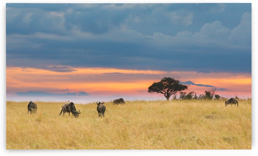 Masai Mara Sunset by ND_PHOTOGRAPHY