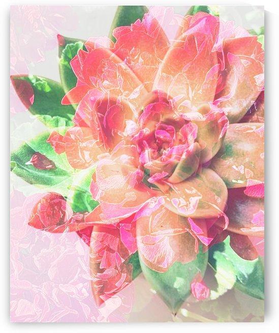 Dancing Petals by Grammydudley