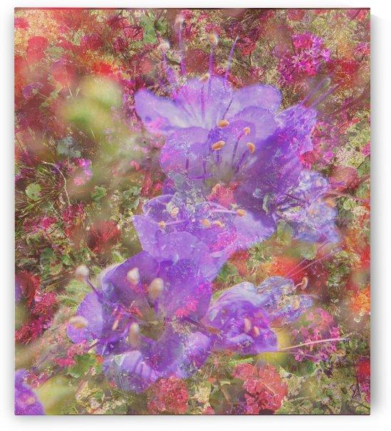 Purple Glory by Grammydudley