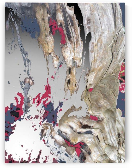 Burned Driftwood Texture by BotanicalArt ca