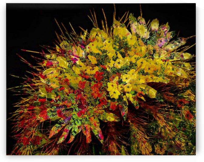 Splash of Color by Grammydudley