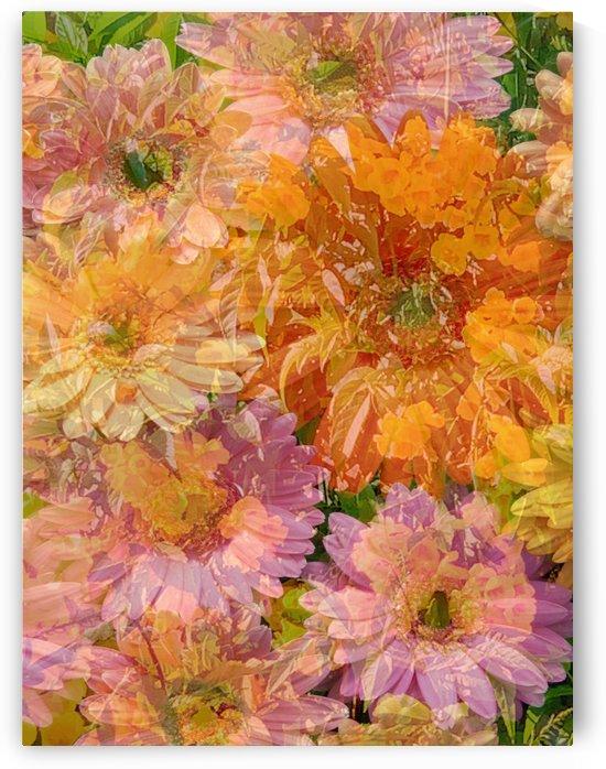 Striking Blooms by Grammydudley