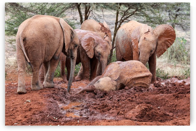 Elephants by ND_PHOTOGRAPHY