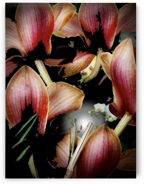 Cymbidium Orchids 200719 by BotanicalArt ca