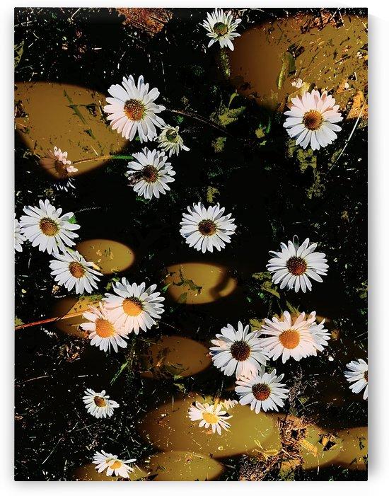 Dancing Daisies by BotanicalArt ca